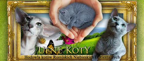 Ufne Koty*Pl, rosyjskie niebieskie, nebelung, kocięta ragdoll, koty rasy ragdoll, szmaciane laleczki